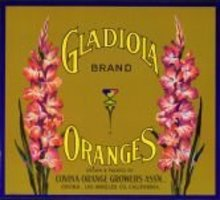 Gladiola Oranges Citrus Crate Label
