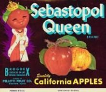 Sebastopol Queen APPLE CRATE Label