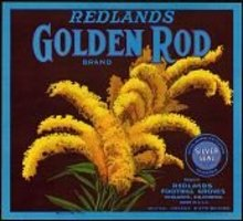 Golden Rod Orange Citrus Crate Label