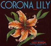 Vintage CORONA LILY ORANGE CITRUS Crate label