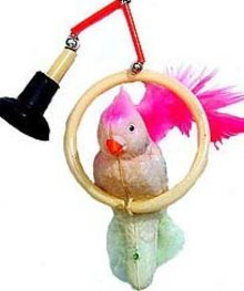 Japan Celluloid Suction Cup Parrot Toy
