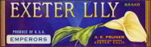 Exeter Lily Grape Crate Label