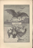 ANTIQUE LYDEKKER BATS ENGRAVING BOOKPLATE 1896