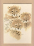 Lion Cubs Matted Art Sharon