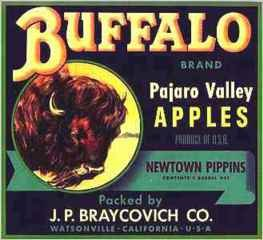 Buffalo Apple Crate Label