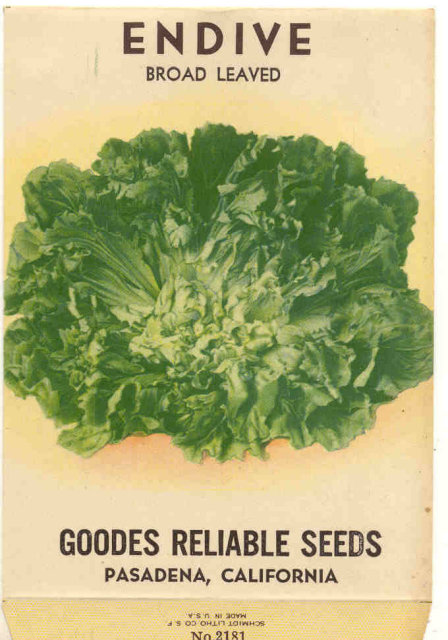 Endive Vegetable Seed Pack 1920s