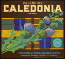 Calendonia Valencia Citrus Orange Crate Label