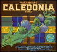 Calendonia Valencia Citrus Orange Crate Label