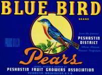Blue Bird Pears Crate Label