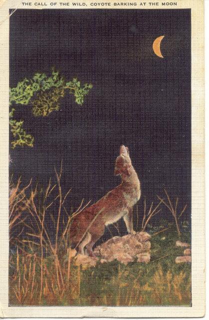 Coyote Linen Postcard