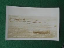 Dead Indians Wounded Knee Battle Field in 1890 Photo Postcard