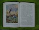 2 Vol. Set The Book of Birds