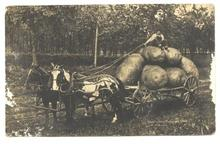 Old 1908 PC Farmer Harvesting Potatoes Horse Wagon Post Card