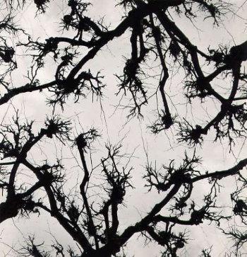 Gunter R. Reitz: Twigs