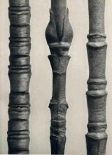 Blossfeldt: Twigs of Two Dogwood Species