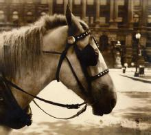 Mitchel A. Obremski: Old Dobbin in Front of County Court House