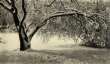 Mitchel A. Obremski: Winter