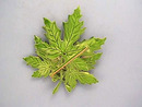 Maple Leaves Pin,Enameled,3 1/4in,Fab!