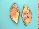Abalone/Paua Shell Earrings,Unusual,Prcd