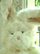 ROAKER Bunny Rabbit by RUSS 27 in