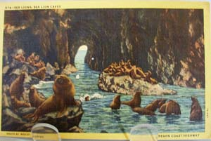 Sea Lions Oregon Coast Postcard