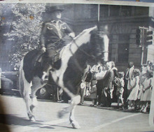 Man on Horse in Parade Photo