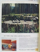 Weyerhaeuser Timber Co Replaces Trees Ad 1954