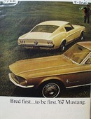 Ford Mustang Bred First to be First Ad 1966