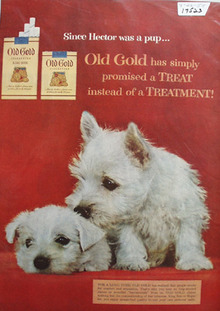 Old Gold Cigarettes & Wire Haired Puppies Ad 1954