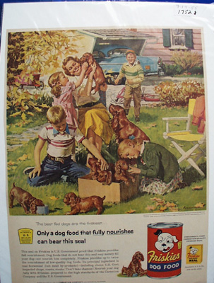 Friskies Dog Food & Irish Setter Ad 1955