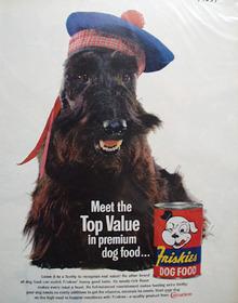 Friskies & Scott Terrier With Blue Cap Ad 1961