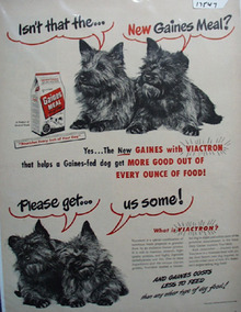 Gaines & Four Scotties Ad 1948