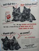 Gaines & Four Scotties Ad 1948