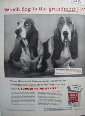 Gaines Grandmother Basset Ad 1957