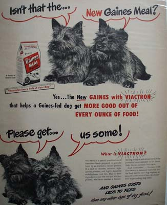 Gaines Dog Food & Two Scotties Ad 1948