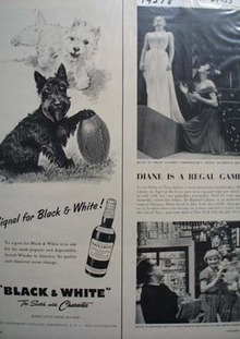 Black & White Whiskey Scottie Signal Ad 1955