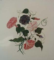 Petunia painting.