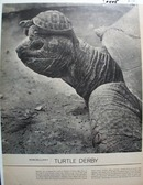 Turtle Derby Article 1967.