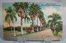 Florida Tropical Avenue1944 Linen postcard