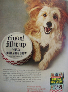 Purina Dog Chow And Wire Haired Dog Ad 1965