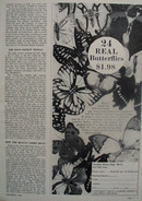 Hamilton House And Butterflies Ad 1964