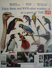 Birds Enjoy These As Guest of Life Ad 1965