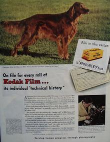 Eastman Kodak And Champion Rufus Ad 1945