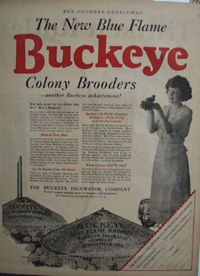 Buckeye Incubator New Blue Flame Ad 1923