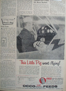 Occo Mineral Feeds Pig Went Flying Ad 1960