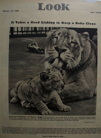 Look Magazine Lion And Cub 1938 picture