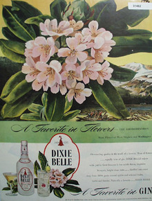 Dixie Bell Rhododendron 1946 Ad