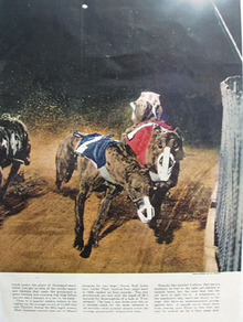 Greyhound Leaping Lightning Racing 1949 Article