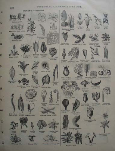 Botany Pictorials from the 1800s, Websters Dictionary
