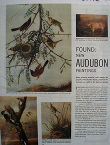 Audubon New Paintings Article and Pictures 1951